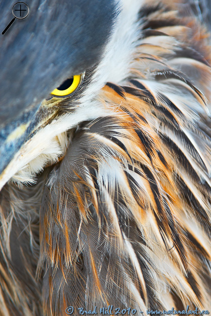 Eye of Heron