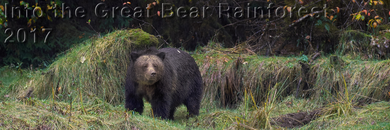 Into the Great Bear Rainforest