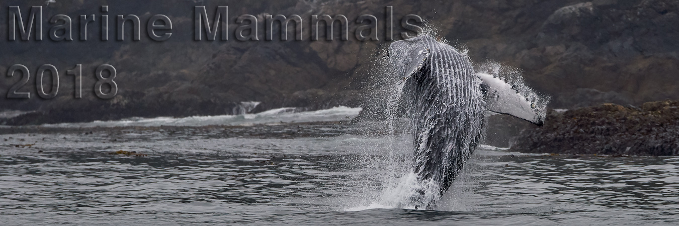 Humpbacks, Orcas, Sea Lions & More!