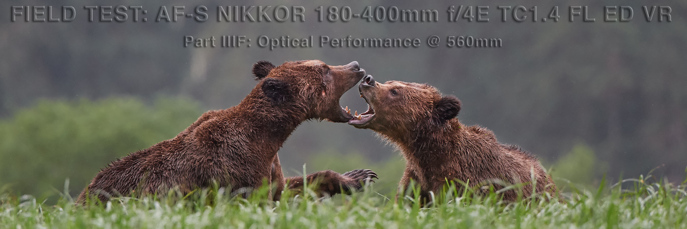 Nikon 180-400mm Field Test: Optical Performance at 560mm