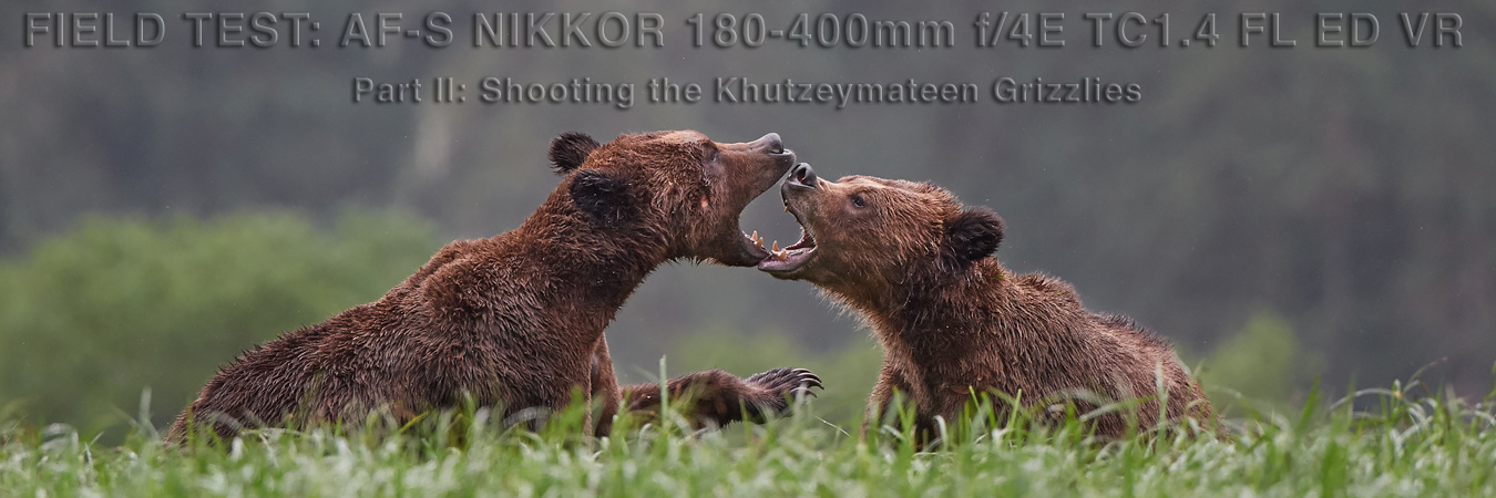 Nikon 180-400mm Field Test: Shooting the Khutzeymateen Grizzlies