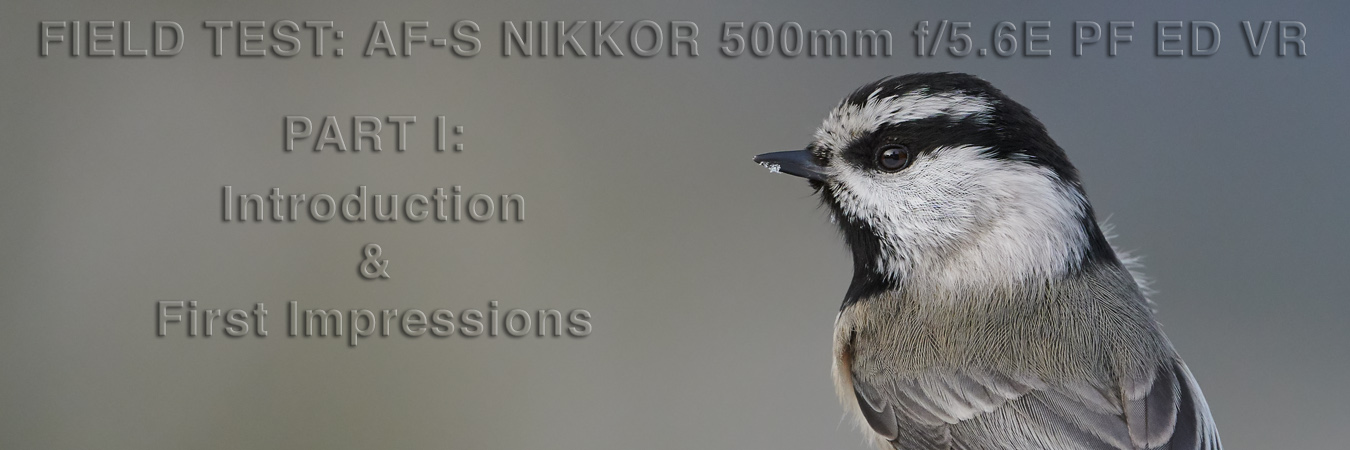 Nikon 500mm f5.6E PF Field Test: Intro & First Impressions