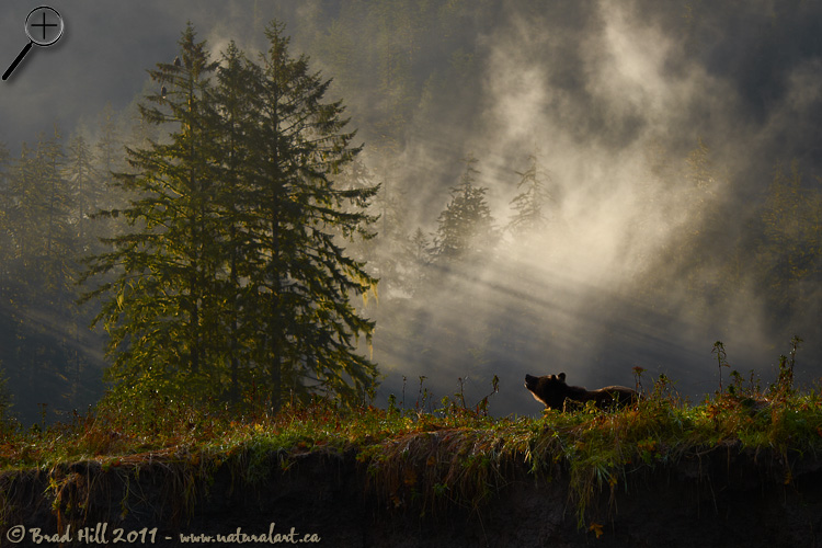 Autumn Sunrise in the Great Bear Rainforest