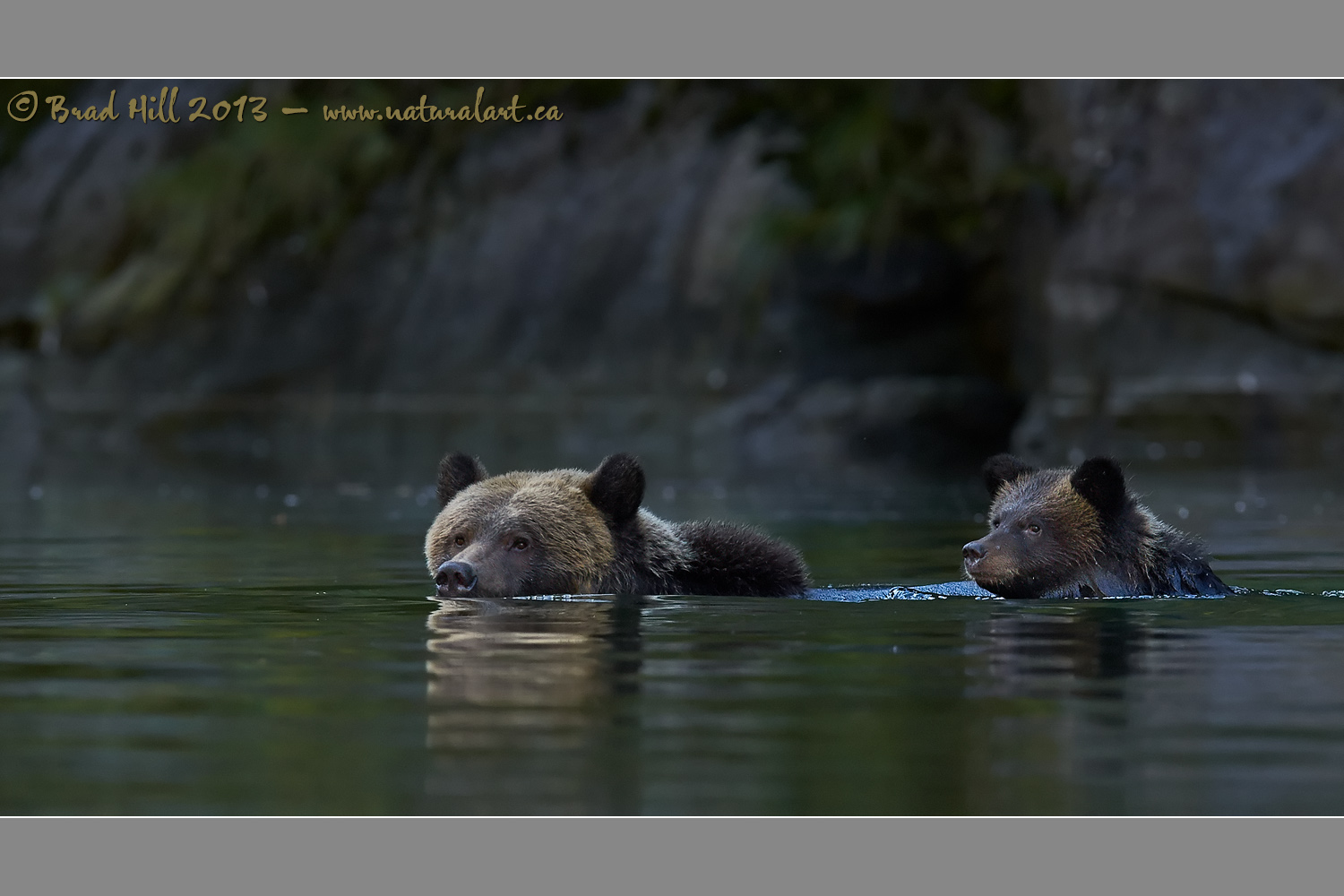 Evening Dip in the Great Bear Rainforest